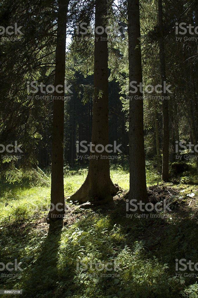 Mystic woods royalty-free stock photo