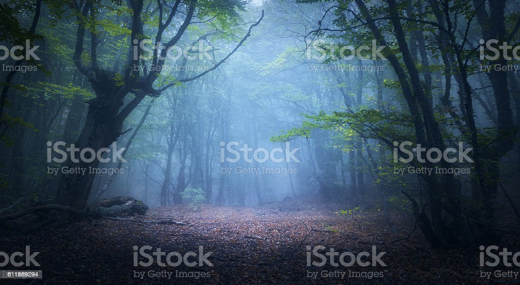 Mystical autumn forest in fog in the morning. Old Tree - foto de acervo