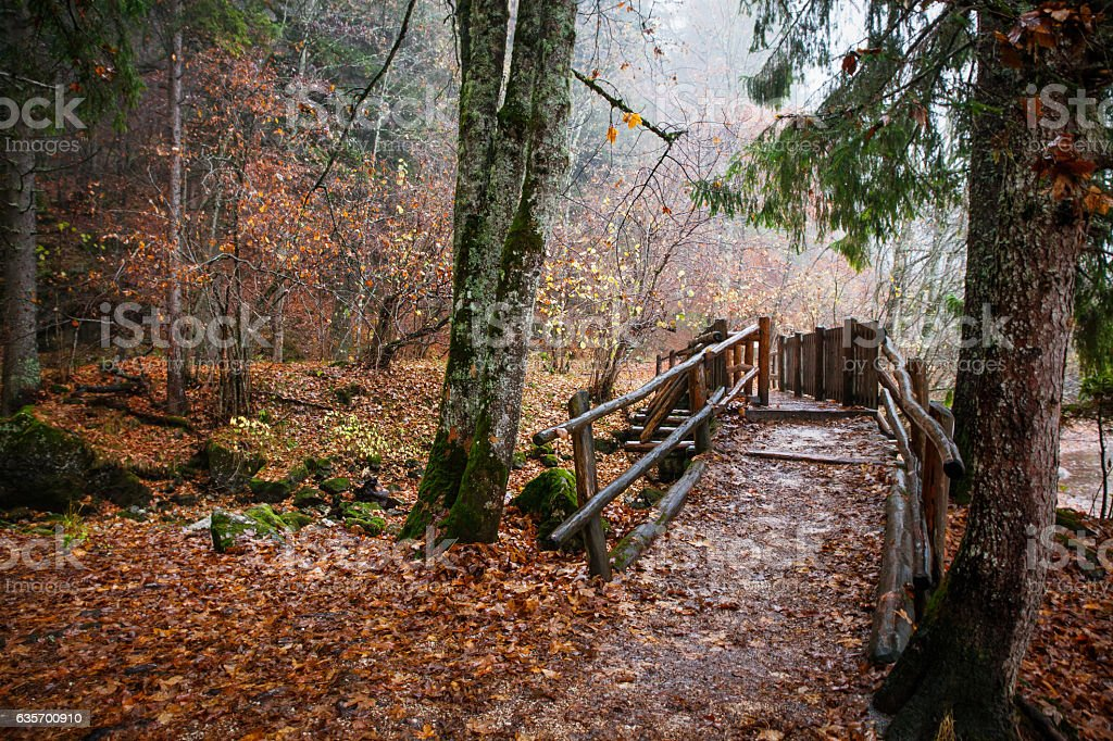 Mystical autumn forest with wooden bridge royalty-free stock photo