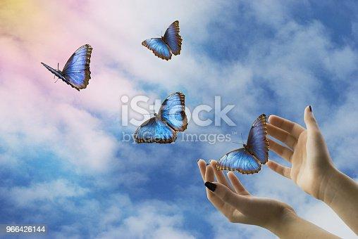 open hands let go of beautiful blue butterflies in the mystical sky