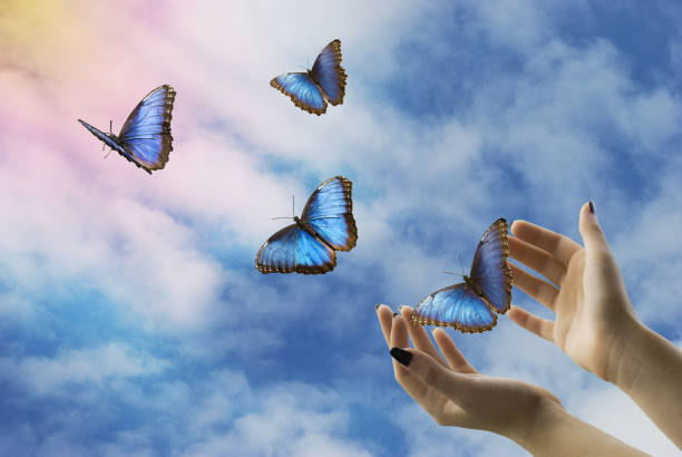 mystical flight of freedom - butterfly stock pictures, royalty-free photos & images