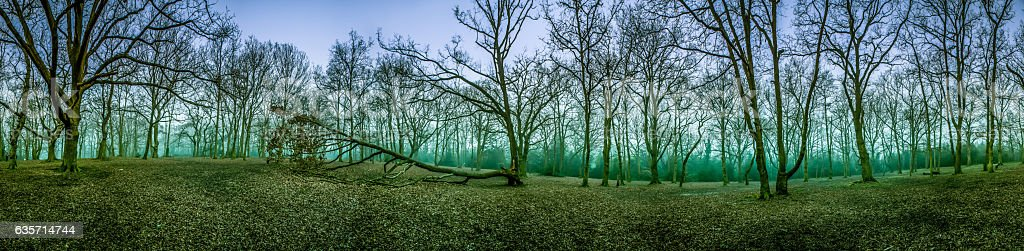 Mystical forest at dawn royalty-free stock photo