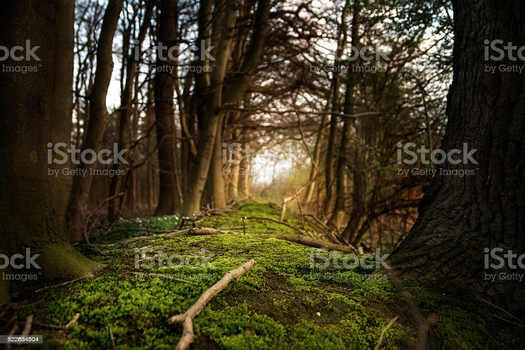 mystical forest footpath with  moss leading between dark trees stock photo