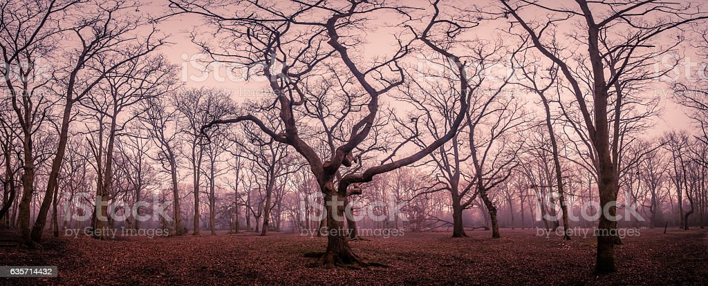 Mystical forest in autumn royalty-free stock photo