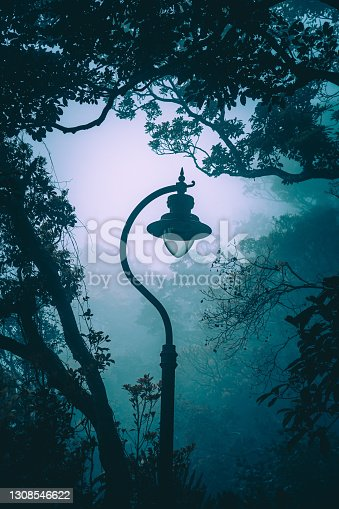 Mystical forest in fog, silhouettes of tree branches in blue fog
