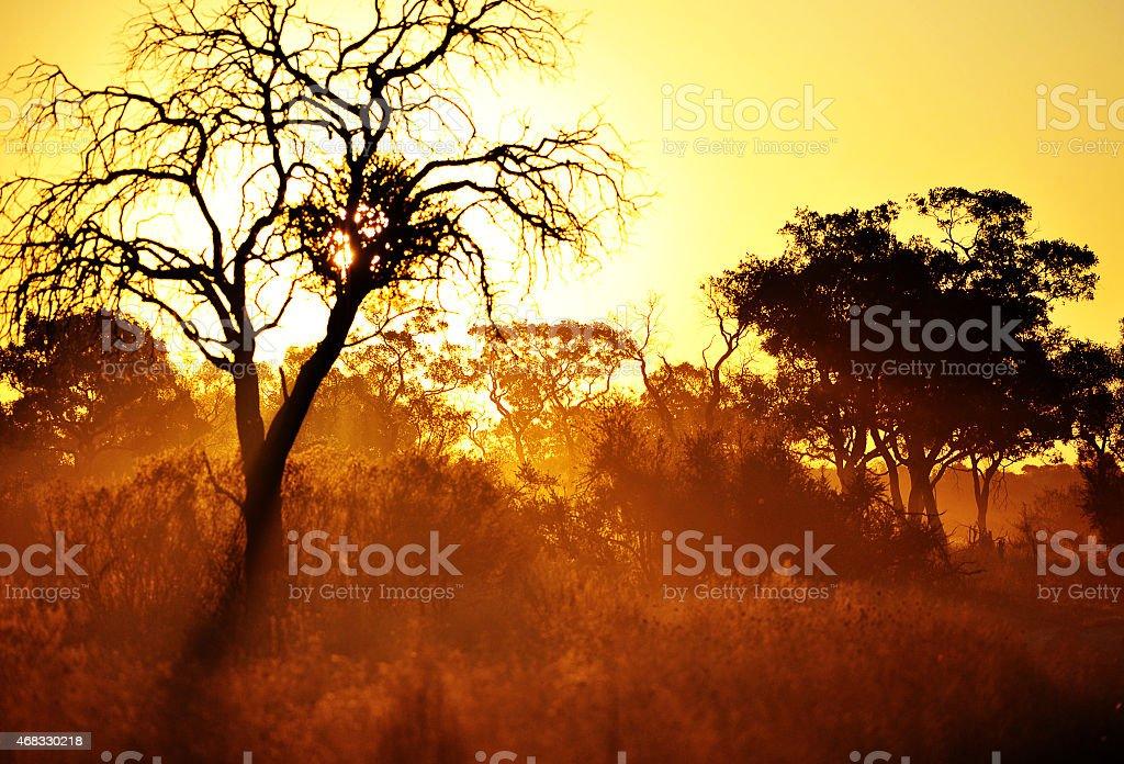 Mystical marshland at dawn, Savuti, Chobe, Botswana stock photo
