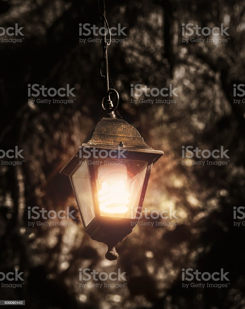 mystical  old street lamp in trees stock photo