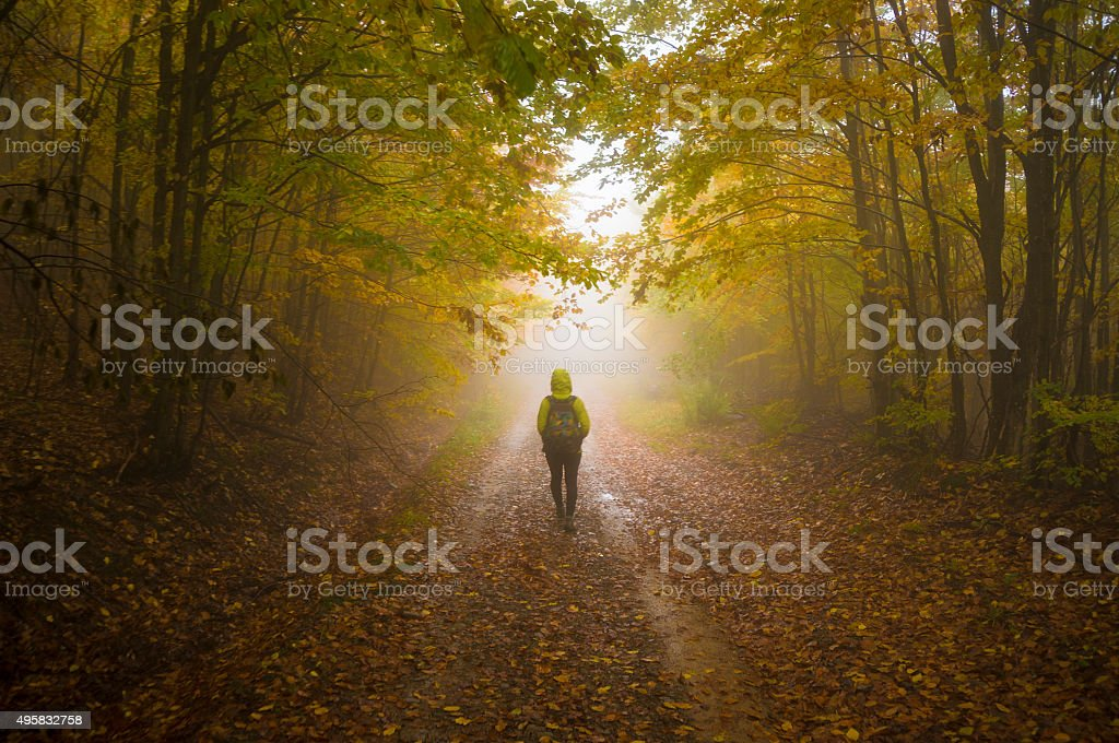 Mystical path stock photo