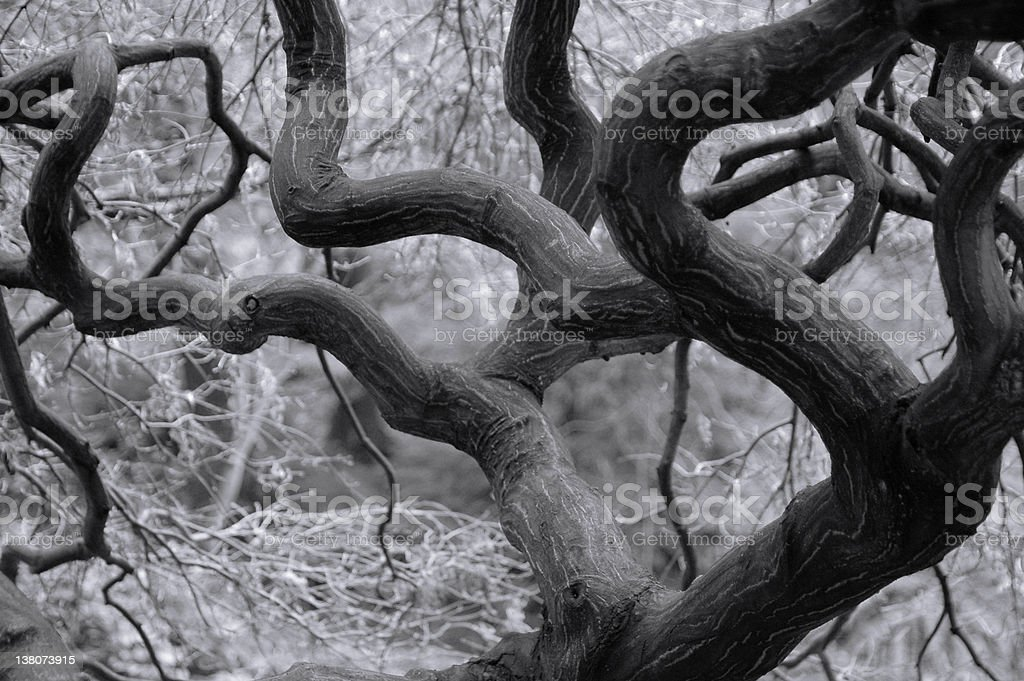 Mystical Tree in forest royalty-free stock photo