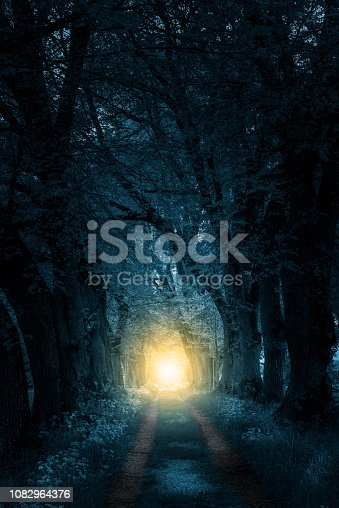 istock mystically forest to light 1082964376