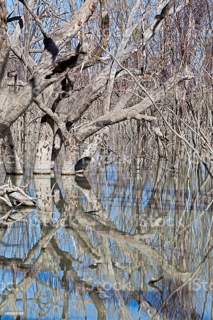 mystrious dead trees Menindee Lakes Australia stock photo