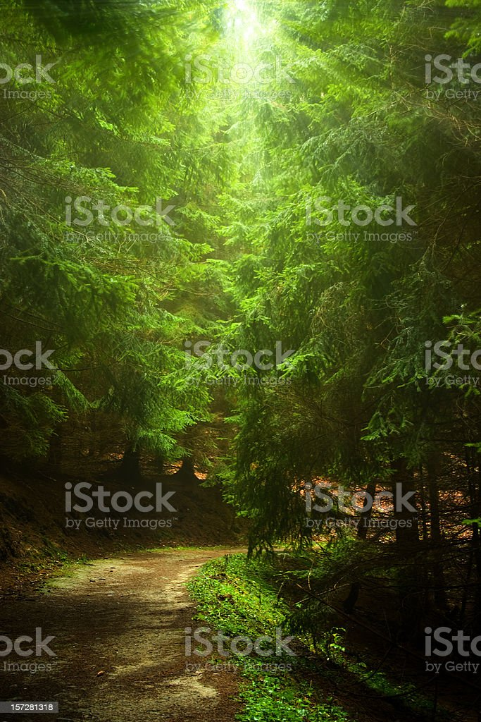mysty forest path royalty-free stock photo