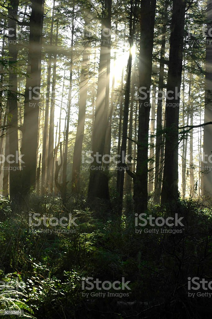 Mythical Forest stock photo