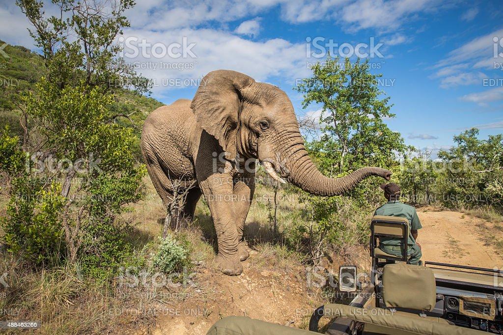 Mzkuze Falls Game Reserve stock photo