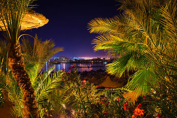 Naama Bay through the palms at night stock photo