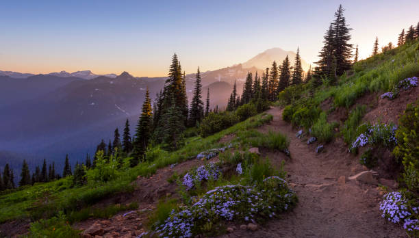 Naches Peak Loop trail at sunset. Naches Peak Loop trail is one of the most popular in Mt Rainier NP, Chinook Pass. washington state stock pictures, royalty-free photos & images