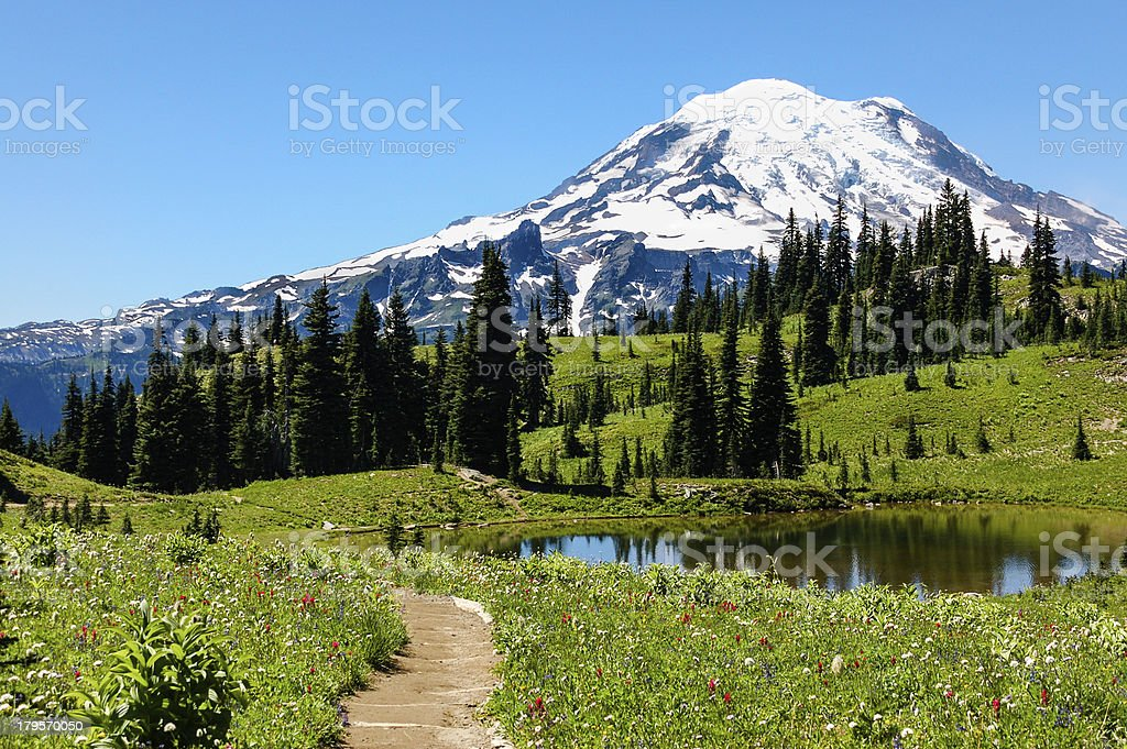 Naches Peak trail, flowering alpine meadows & Mount Rainier, WA stock photo