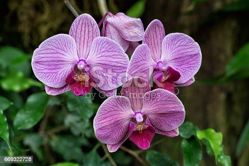 orchids in a garden
