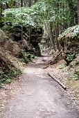 istock Nackova rokle ravine with forest and hiking trail in CHKO Kokokorinsko in Czech republic 896845418