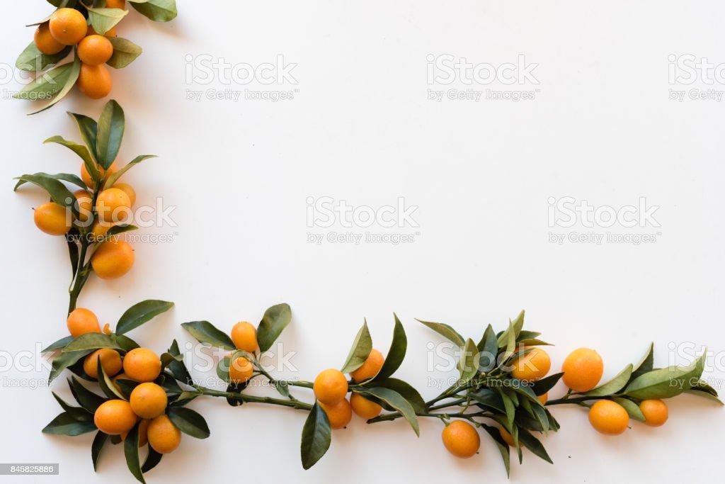 Nagami kumquats from above stock photo