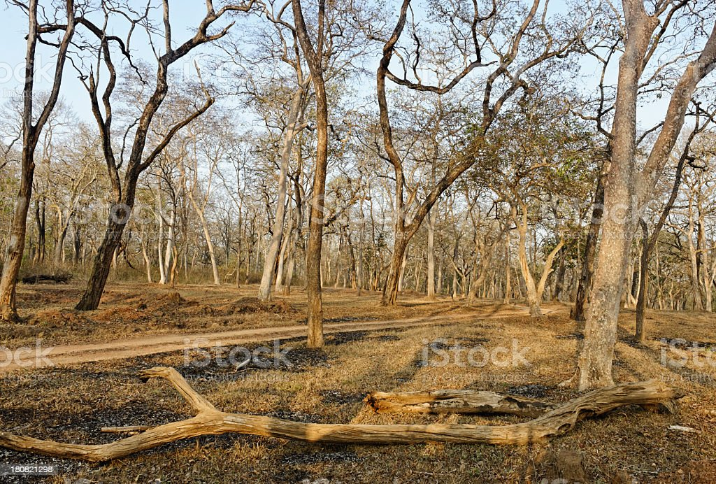 Nagarhole stock photo