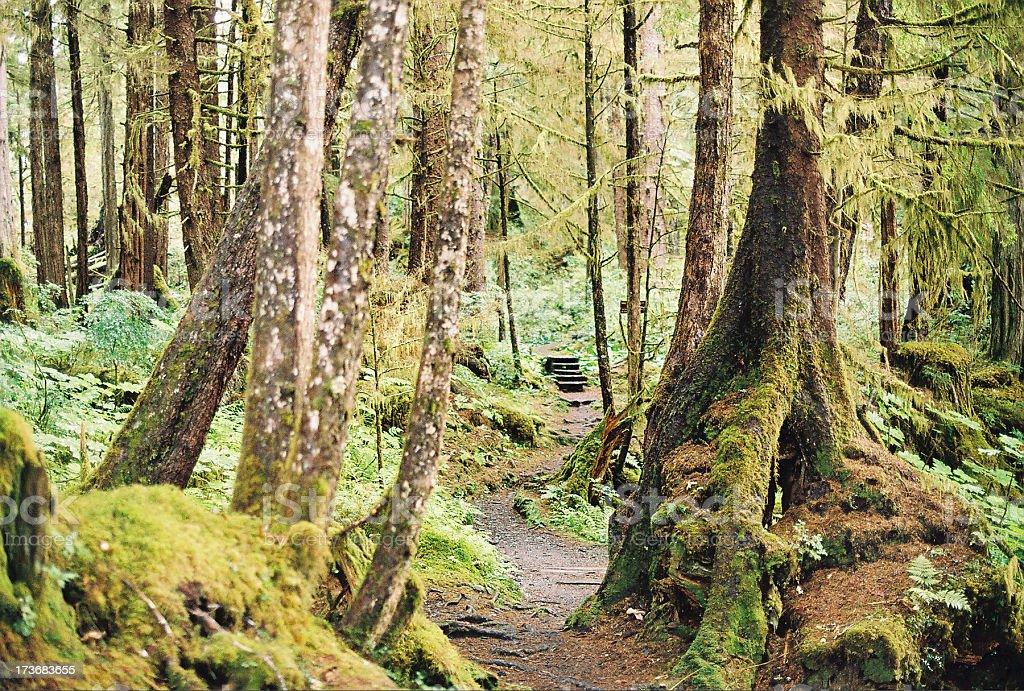 Naha River trail stock photo