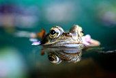 Nahaufnahmen von Reptilien in der freien Natur