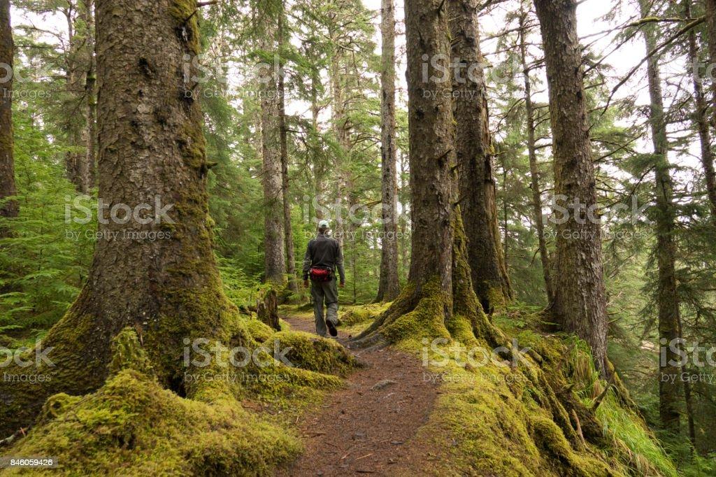 Naikoon Provincial Park spruce forest trail hiker man Haida Gwaii British Columbia Canada stock photo