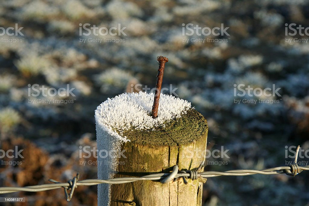 Nailed in snow royalty-free stock photo