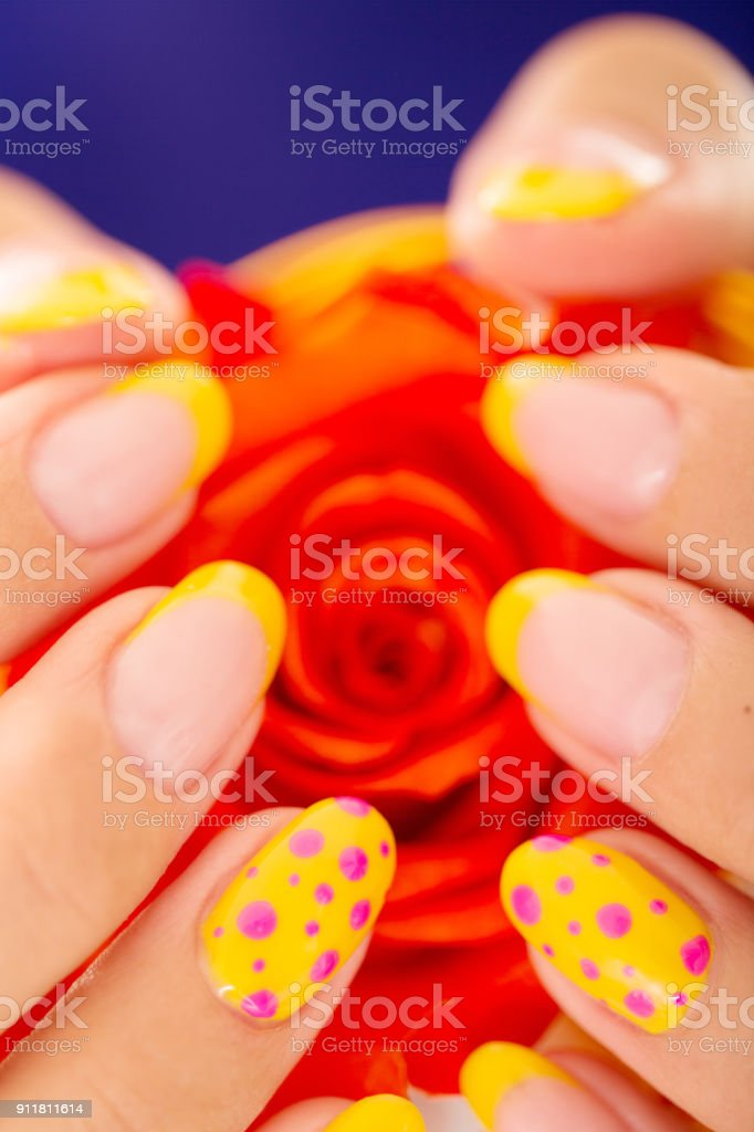 Nails Polished In Yellow Holding A Rose Stock Photo & More Pictures ...