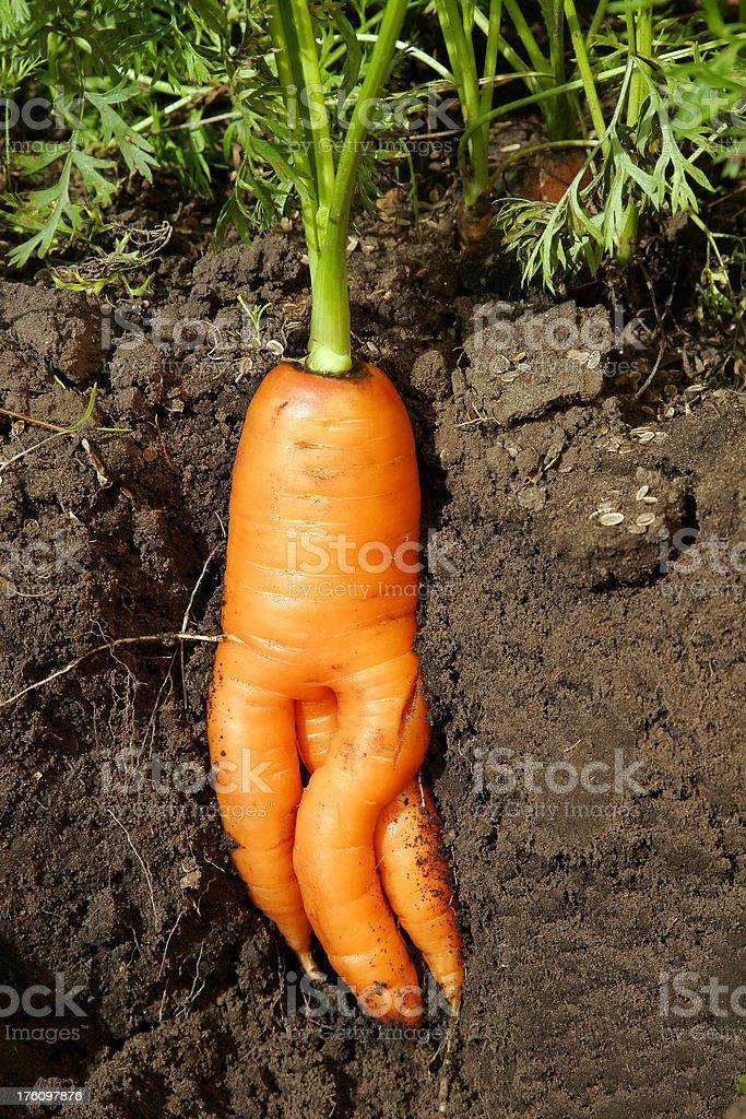 Naked Carrot royalty-free stock photo