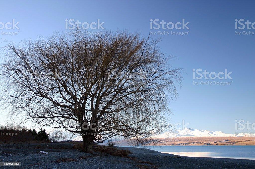Naked Tree royalty-free stock photo