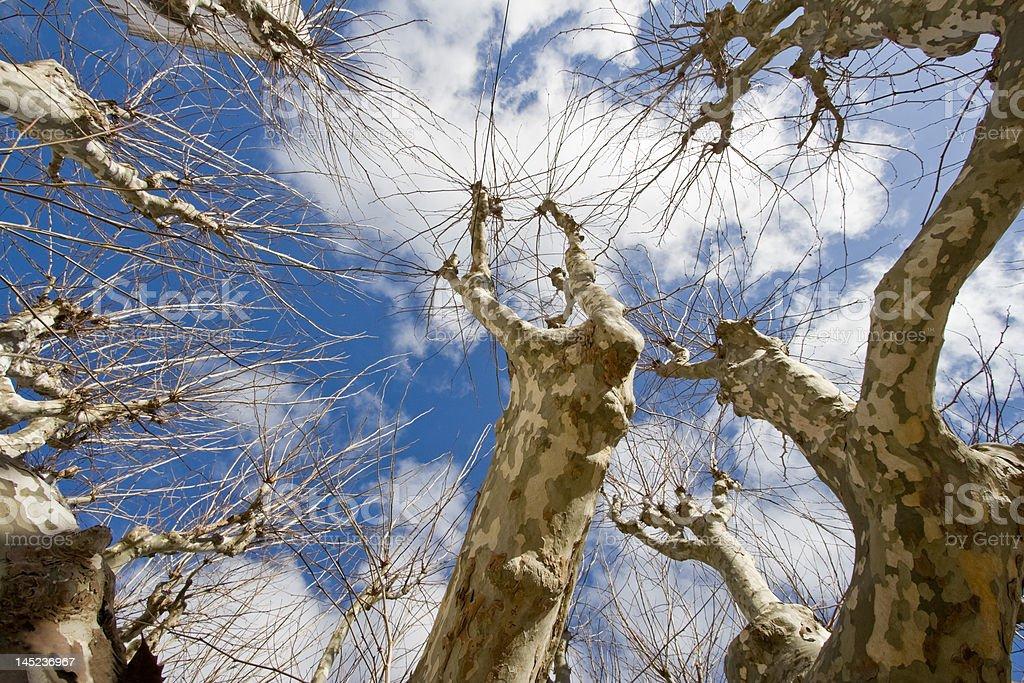 Nu Árvore - fotografia de stock
