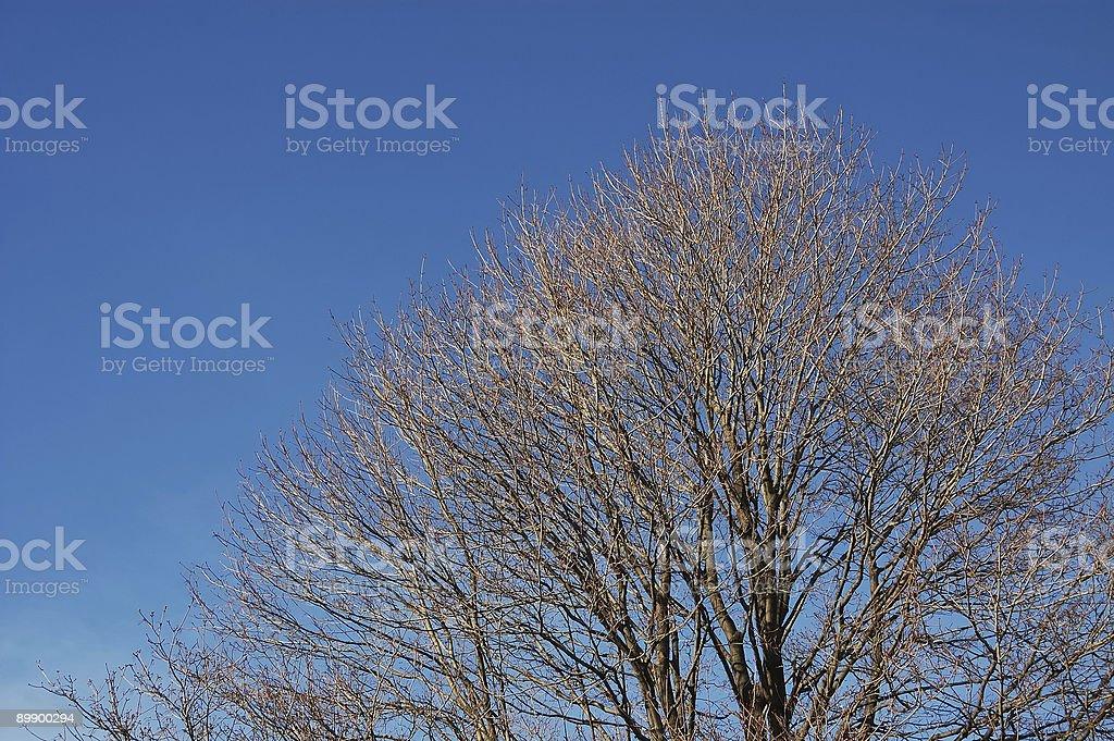 Обнажённый дерево Стоковые фото Стоковая фотография