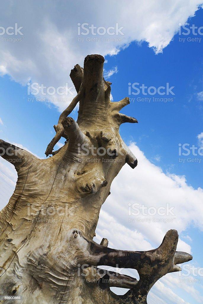 Nackt Baum Lizenzfreies stock-foto