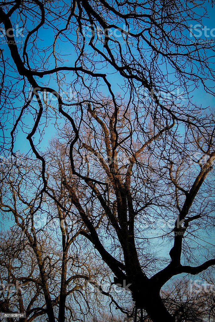Nackt Bäume – Foto
