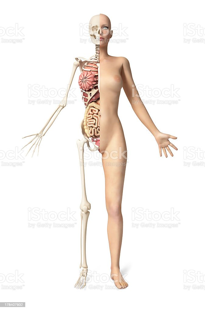 Naked woman body standing, with half cutaway. Front view. stock photo