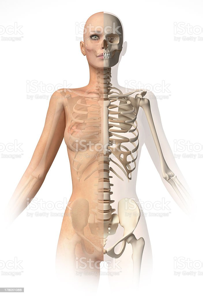 Naked woman body, with bone skeleton superimposed, clipping path included. stock photo