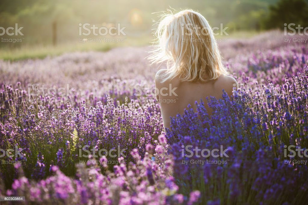 Naked woman posing in lavender field at sunset stock photo