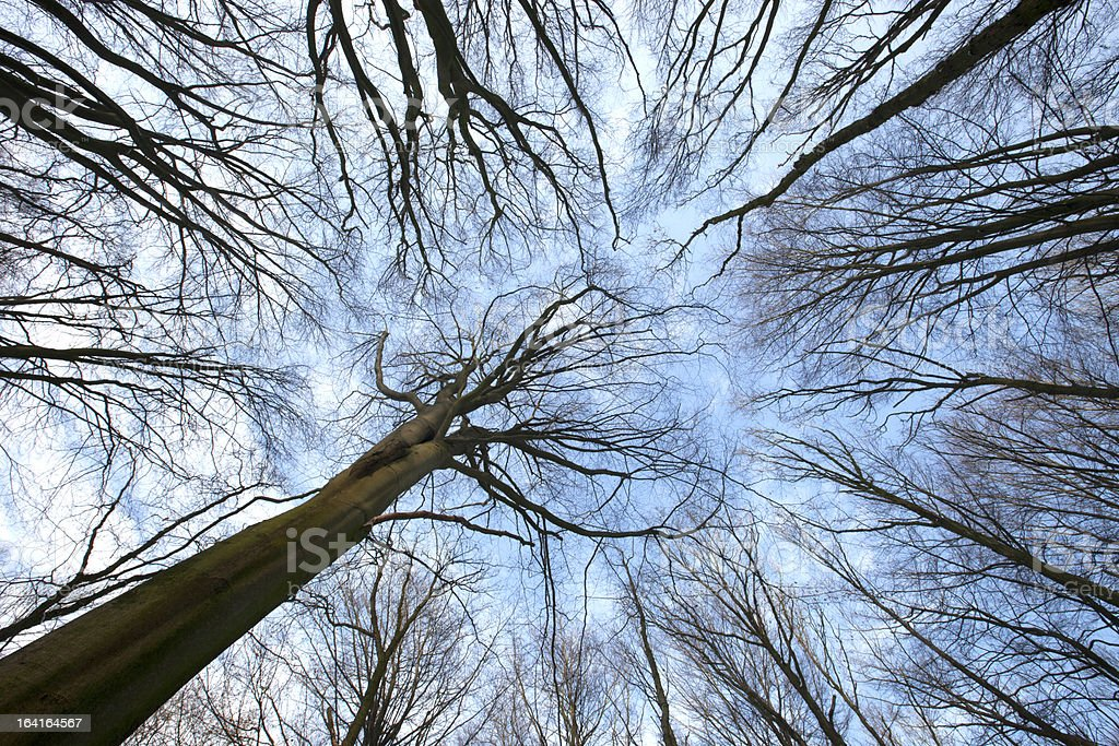 Naked Woods royalty-free stock photo