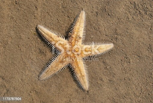 Name : Starfish Scientific Name:  Location: Beyt Dwarka Starfish or sea stars are echinoderms  belonging to the class  Asteroidea. Starfish occur across a broad depth range from the intertidal to abyssal depths (>6000 m).Starfish are among the most fami