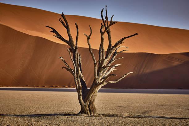 namib desert - namib wüste stock-fotos und bilder