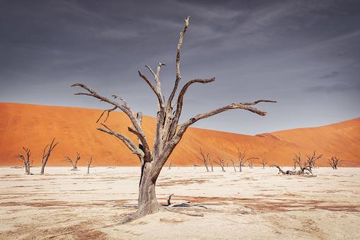 Namib Desert Trees Dead Vlei Sossusvlei Namibia Stockfoto und mehr Bilder von Abgestorbene Pflanze