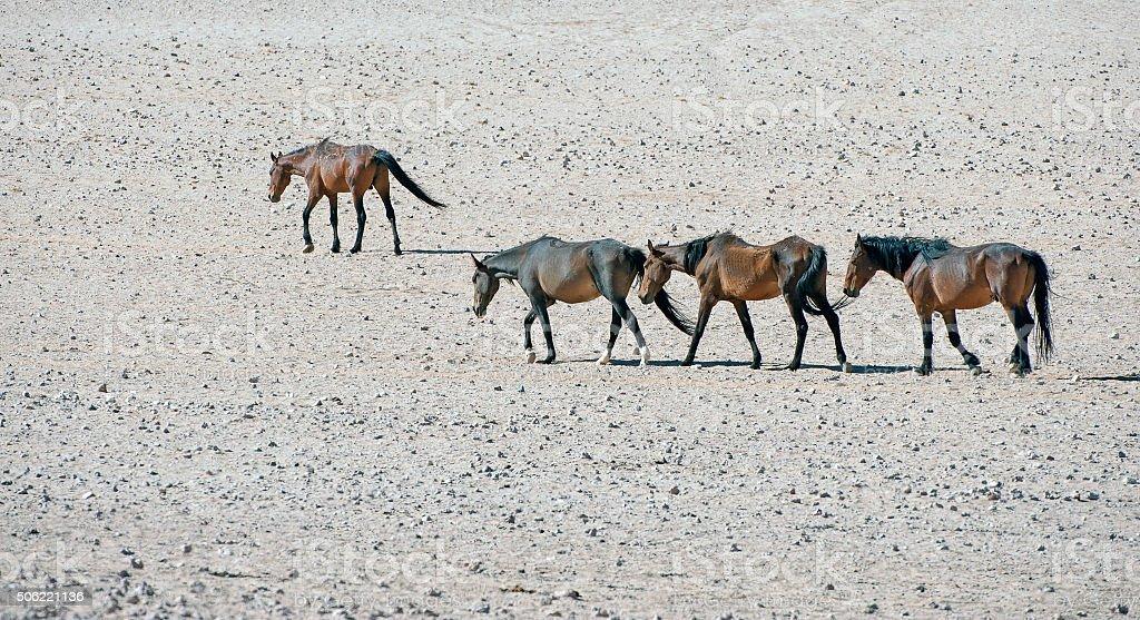 Namib desert wild horses amble in the heat stock photo