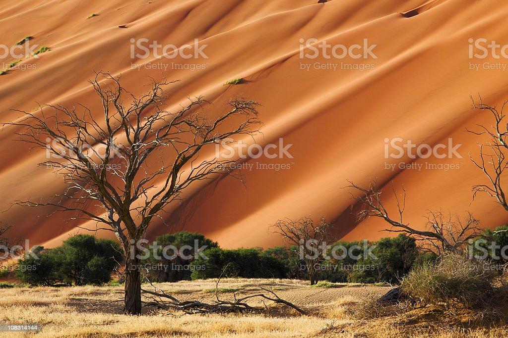 Namib royalty-free stock photo