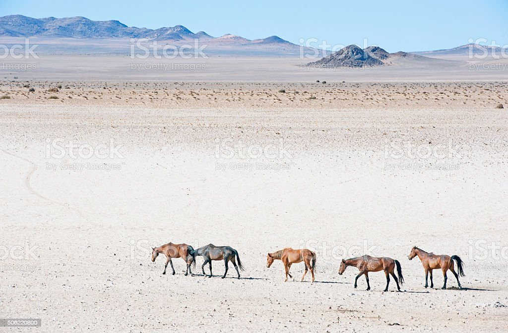 https://media.istockphoto.com/photos/namib-wild-horses-saunter-across-the-desert-namibia-picture-id506220800