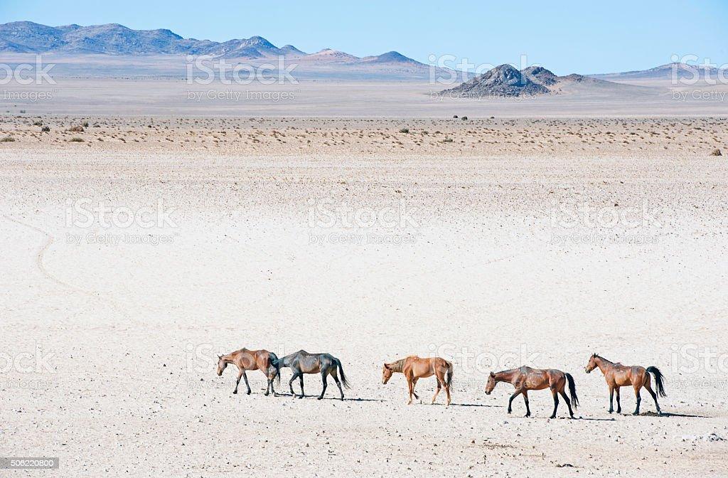 https://media.istockphoto.com/photos/namib-wild-horses-saunter-across-the-desert-namibia-picture-id506220800