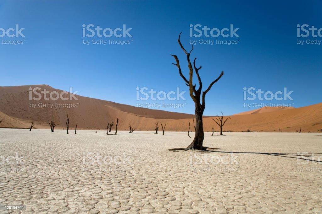 Namibia Desert Dead Vlei Trees stock photo