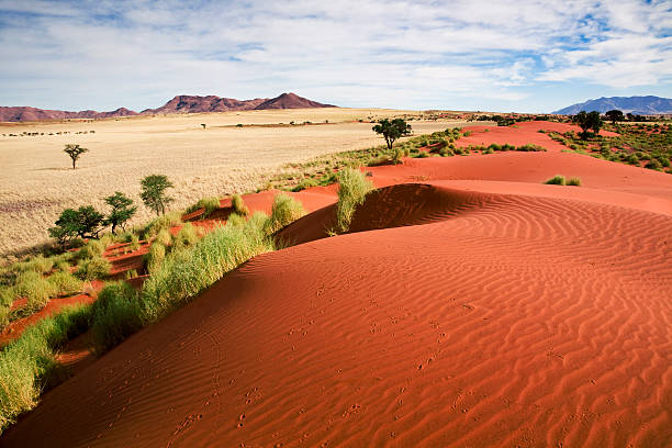Namibia prairie landscape Beautiful prairie landscape and sand dunes, Wolwedans, Naukluft, Namibia, South West Africa. namibia stock pictures, royalty-free photos & images