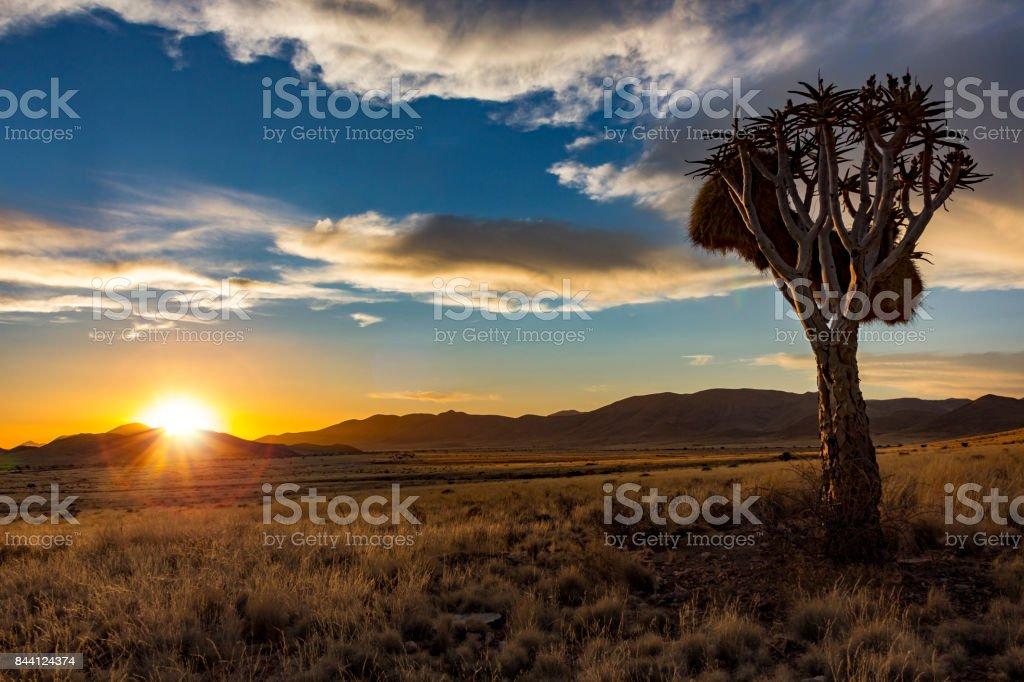 Namibia Sonnenuntergang Köcherbaum – Foto